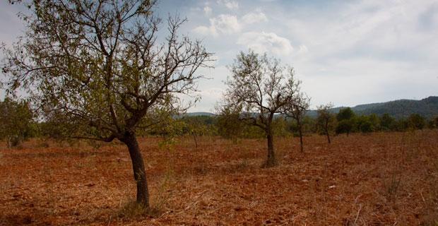 Dry Ibiza