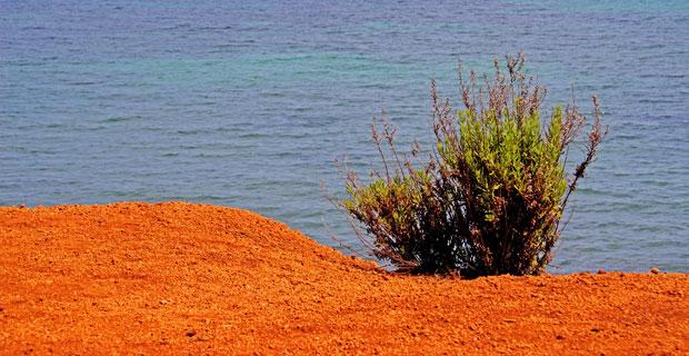 Orange Ground
