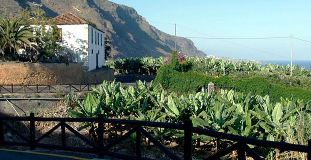 Platano Canarias